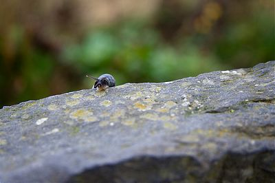 Snail on the Cliffs of Moher